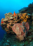 Colorful, coral reef Stock Image