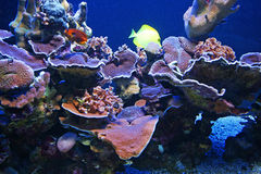 Colorful coral reef Royalty Free Stock Image