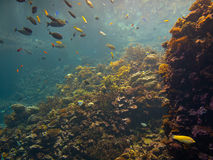 Colorful coral reef. With tropical fish Stock Photo
