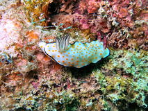 Colorful coral reef. Underwater view of colorful marine organisms on coral reef Royalty Free Stock Images