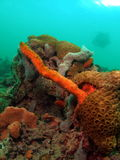 Colorful Coral Reef. This colorful coral is a very common in south Florida Stock Photos