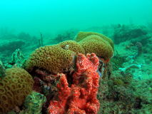 Colorful Coral Reef. This colorful coral was taken in south Florida Stock Images