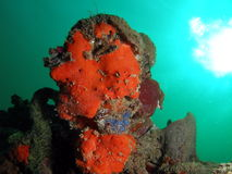 Colorful Coral Reef. This colorful coral was taken in south Florida Stock Photos