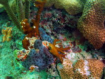 Colorful Coral Reef. This colorful coral was taken in south Florida Stock Image