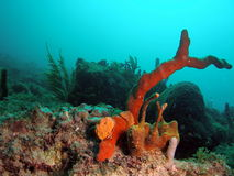 Colorful Coral Reef. Colorful coral taken at 30 feet off the south Florida coast Royalty Free Stock Images