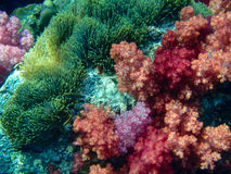 Colorful coral reef Stock Images