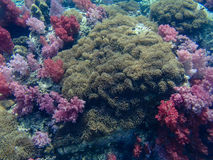 Colorful coral reef Royalty Free Stock Photo