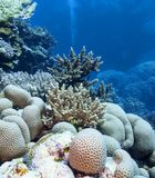 Colorful coral reef at the bottom of tropical sea, underwater landscape. stock image