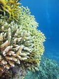 Colorful coral reef on the bottom of tropical sea, underwater landscape. stock photography