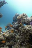 Colorful coral reef at the bottom of tropical sea Stock Photos