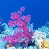 Colorful coral reef on the bottom of tropical sea, underwater landscape royalty free stock images
