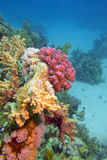 Colorful coral reef at the bottom of tropical sea - underwater Royalty Free Stock Photography
