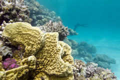 Colorful coral reef at the bottom of tropical sea, underwater Royalty Free Stock Photos