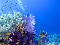 Colorful coral reef on the bottom of tropical sea, underwater landscape. stock images