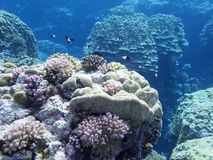 Colorful coral reef on the bottom of tropical sea stock photos