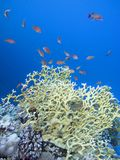Colorful coral reef on the bottom of tropical sea, underwater landscape stock photos