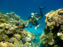 Colorful coral reef and diver in tropical sea, underwater Royalty Free Stock Photos