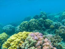 Colorful coral reef diversity. Tropical seashore underwater photo. Marine nature. Warm seashore. Coral reef on seabottom