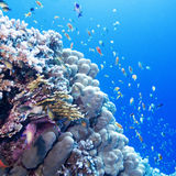 Colorful coral reef with exotic fishes in tropical sea, underwat Stock Photos