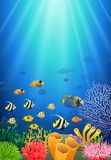 Colorful coral reef with fish and stone. Arch on a blue sea background. Illustration Royalty Free Stock Photos