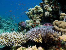 Colorful coral reef with  fishes Stock Photo