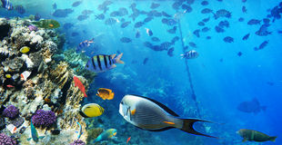 Colorful coral reef fishes. royalty free stock photos