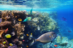 Colorful coral reef fishes. Stock Photo