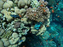 Colorful coral reef with fishes. Underwater world of coral and fishes Stock Photo