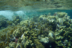 Colorful coral reef with fishes. Underwater world of coral and fishes Stock Images