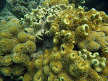 Colorful coral reef with fishes. Underwater world of coral and fishes Stock Image