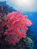 Colorful coral reef Royalty Free Stock Photos