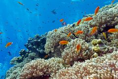 Colorful coral reef with hard corals and exotic fishes at the bottom of tropical sea Stock Photography