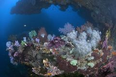 Colorful coral reef on the ledge of a deep undersea wall. Vibrant coral reef on the ledge of a deep undersea wall. Raja Ampat, Indonesia royalty free stock photos