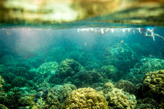 Colorful Coral Reef at Lipe Island in Thailand. Colorful Coral in Lipe Island sea with fishes are swimming Royalty Free Stock Image