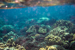 Colorful Coral Reef at Lipe Island in Thailand Royalty Free Stock Image
