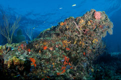 Colorful Coral Reef Outcropping Stock Images