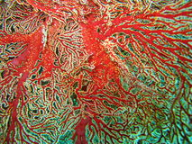 Colorful coral reef plant. Close up of colorful coral reef plant Royalty Free Stock Photography