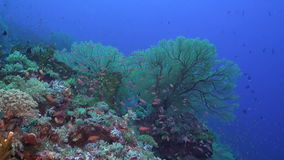 Colorful coral reef with plenty fish stock video footage