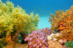 Colorful coral reef with soft corals - underwater Stock Photos
