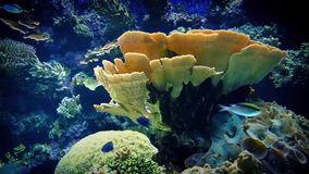 Colorful Coral Reef With Tropical Fish. Coral reef with huge anemones and plants of many colors with fish swimming around stock footage