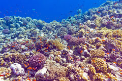 Colorful coral reef in tropical sea, underwater Stock Photos