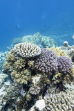 Colorful coral reef in tropical sea, underwater Royalty Free Stock Photos