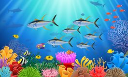 Colorful coral reef with tuna fish and stone. Arch on a blue sea background Stock Photos