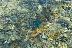 Colorful coral reef under the wavy water surface Stock Image