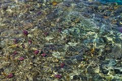 Colorful coral reef under the wavy water surface Stock Photo