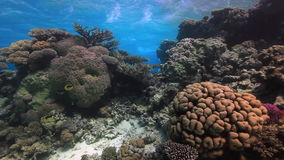 Colorful coral on sandy bottom deep underwater in Red sea. stock video footage