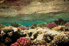 Colorful coral water surface Royalty Free Stock Images
