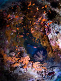 Colorful corals cave royalty free stock photography