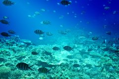 Colorful corals, fishes of Red Sea.  Egypt. Stock Image