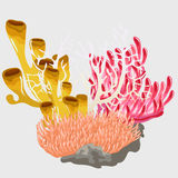 Colorful corals, scenery of underwater world Stock Photo